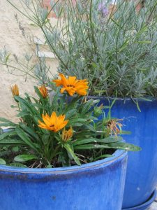 Blumen-Argile-dor