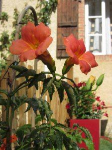 Argile-dor-Ferien-in-Frankreich-Garten