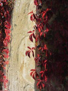 Argile-dor-Herbstfarben-Wilder-Wein-2