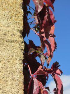 Argile-dor-Herbstfarben-Wilder-Wein-3